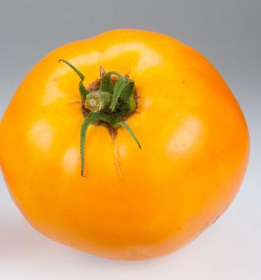 Tomato - Carolina Gold